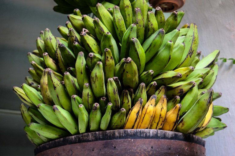 Colombian plantain