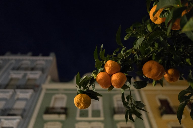 26 Valencia's orange trees